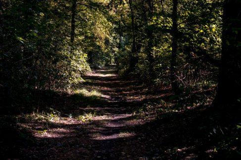 3 Schritte und du bist mitten Im Wald