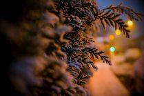 Stadtkind und Schnee