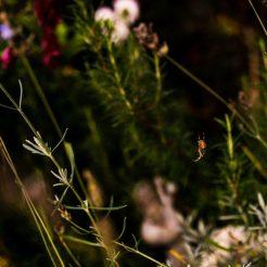 eine kleine Spinne...