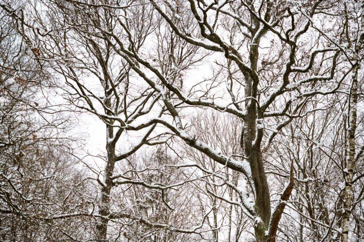 Bäume, die tanzen